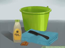 image titled give a small dog a bath step 1