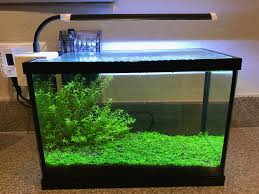 Best Low Light Carpet Plant Monte Carlo Without Co2 The Planted Tank Forum