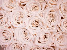 Rose Gold Aesthetic Wallpapers ...