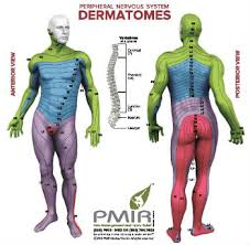 Spinal Dermatomes Chart Dermatomes A Diagnostic Tool Pain Injury Relief