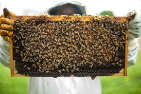 Αποτέλεσμα εικόνας για bee hive