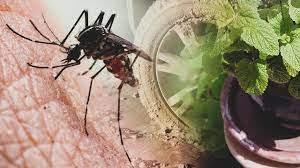 Karadeniz'de yeni tehlike: Asya Kaplan Sivrisineği - Son Dakika Haberleri