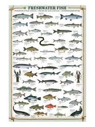 Texas Fish Chart Freshwater Fish