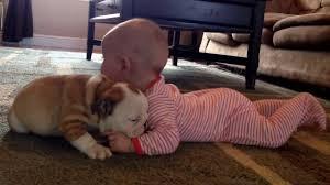 cute baby bulldog. Interesting Cute YouTube Premium To Cute Baby Bulldog
