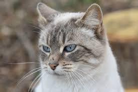 「猫の無料写真」の画像検索結果
