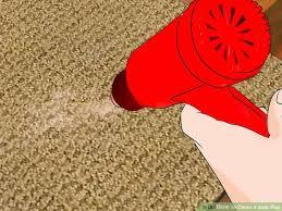 image titled clean a jute rug step 6