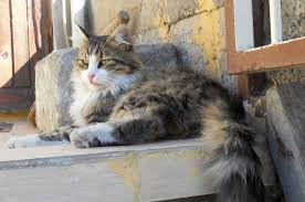 Ingin Pelihara Kucing Anggora Kenali Sifat Dan Cara Merawatnya Yuk Semua Halaman Bobo