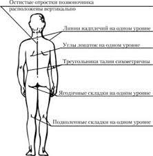 МЕТОДИКО ПРАКТИЧЕСКИЕ ЗАНЯТИЯ ВТОРОГО ГОДА ОБУЧЕНИЯ Методы оценки  Рис 13 1 1 Вид человека спереди