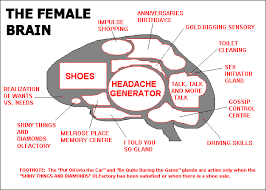 help me understand the female brain society shiachat com image result for female brain