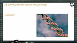 Biomolecules Biological Functions Of Nucleic Acids Session 6