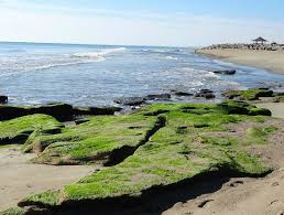 Kure Beach Tide Chart Outcrop Best Free Activity On The Island Review Of