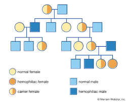 Genetic Pedigree Chart Symbols Pedigree Definition Breeding Symbols Britannica