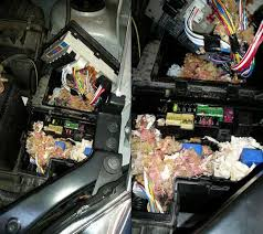 mouse damange in car fuse box leo & sons auto repair fuse box in cab 2002 f150 supercrew if you or someone you know has an unwanted tenant living in their car, leo & sons can evict them!