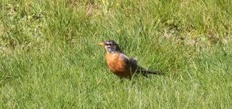 Nesting Birds - Vote - Misleading on Revaluation