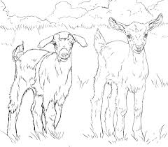 Image result for goats drawings