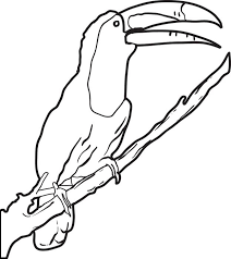 Small Picture Toucan Coloring Page Coloring Coloring Pages
