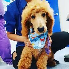 griffithveterinaryhospital Instagram posts (photos and videos) - Picuki.com