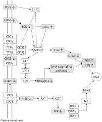 journal.pone.0153932.g005 transcriptional profiling of ileocecal valve of holstein dairy on discovery ke controller wiring diagram