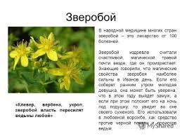 Презентация на тему Лекарственные растения Выполнил ученица  6 Зверобой