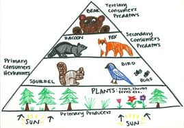food web pyramid pin by cariño of the fifth sun on classroom savvy science energy