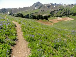 hiking in the southern chilcotins wildflower heaven sea to sky gallery image