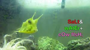 Cool Aquariums Longhorn Cowfish In Saltwater Fish Tank Home Aquarium Setup As