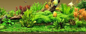 fish tank wallpapers. Plain Tank 3264x2448 25 Aquarium Backgrounds  Wallpapers FreeCreatives   To Fish Tank I