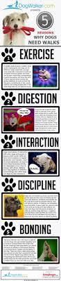 Best 25 Pet Sitting Business Ideas On Pinterest Pet Sitting