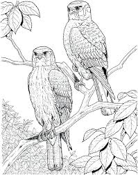Birds Coloring Page Birds Coloring Pages Birds Coloring Pages