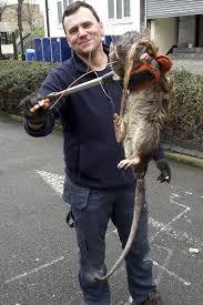 Rat gevangen