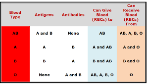 Blood Types Compatibility Human Blood Types And The Genetics
