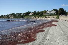 Red tide | marine biology