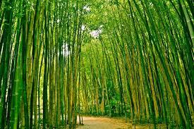 Fotobehang Bamboe Bos Postersnl