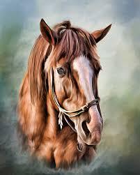 chestnut horse head a painted pet