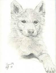 white wolf pup drawing. Fine Wolf Anime Wolf Pup And White Wolf Pup Drawing P