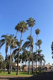 palm trees tumblr vertical. Balboa Park Palm Tree Trees Tumblr Vertical G