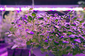 Light Farm Ge Current Lights Up Indoor Farm Smart Cities World