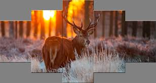 cute deer in sunset forest paintings wall art canvas prints landscape pictures oil paintings on canvas
