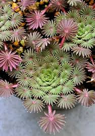 Small Picture 156 best Succulents images on Pinterest Succulent gardening