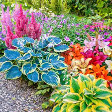 shade perennials shade garden kit