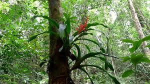 Aechmea bromeliaceae terraria