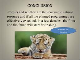 conservation wildlife conservation
