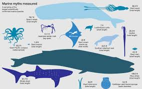 Shark Size Comparison Chart How Big Are The Biggest Squid Whales Sharks Jellyfish