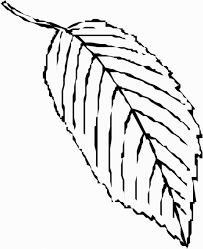 Small Picture Palm Tree Leaves Template Palm Leaf Coloring Page 236x310px