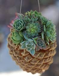 ... Hanging Pine Cone Succulent Planter Garden Dreams Hanging Ideas Martha  Stewart Large Size ...