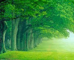 23+ Nature Green Wallpaper Free ...
