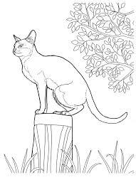 Small Picture 59 best Cat Coloring Pages images on Pinterest Drawings