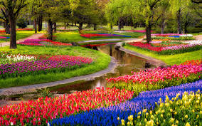 colorful garden flowers hd free wallpapers
