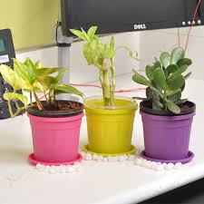 feng shui plant office. lucky money attracting feng shui table top office desk plants plant
