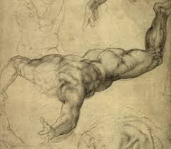 drawing anatomy art by michelangelo